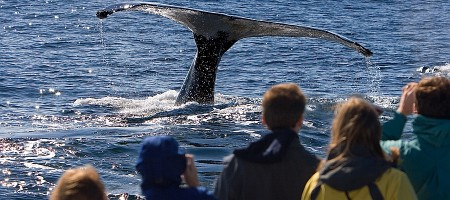 Cape Cod Whale watching.jpg